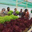 Bersama Ketua DPRD, Polres Pakpak Bharat Panen Sayur  Hidroponik