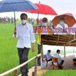 Presiden Jokowi: Lumbung Pangan di Sumba Tengah, NTT Akan Diperluas