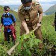 Bupati Samosir Kerjasama PPRTB dan IALUSIDO Tanam 1000 Pohon Mahoni